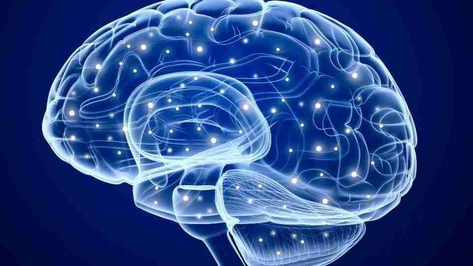 epilessia-cervello-encefalo